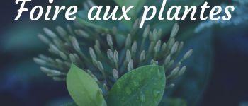 Foire aux plantes au marché rural de Saint-Cernin Les Pechs du Vers