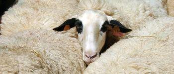 La brebis des Causses du Lot : sa laine et ses usages au fil du temps / Conférence et exposition Cremps